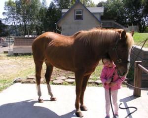 Horse-44