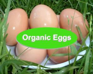 OrganicEggs-44