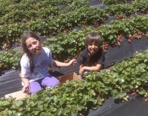 Organic Produce, Fresh Flowers & English Lavender