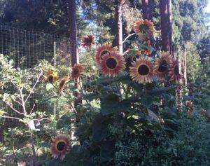 Rancho_Rincon_Flowers
