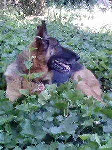 Rancho_Rincon_Happy_Dog