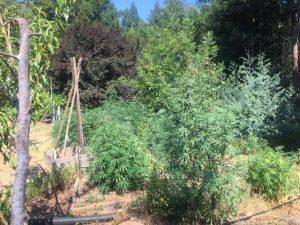 Rancho_Rincon_Herb_Plants