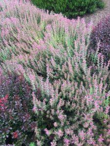 Rancho_Rincon_Herbs