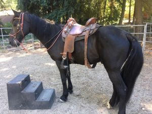 Rancho_Rincon_Horse