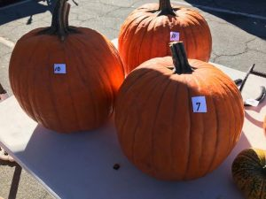 Rancho_Rincon_Pumpkins